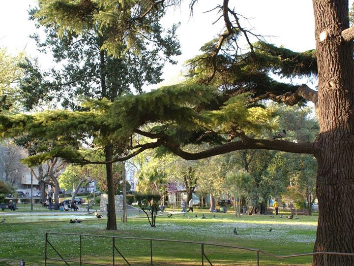 Árvores (nas ruas) de Lisboa: percurso pela toponímia