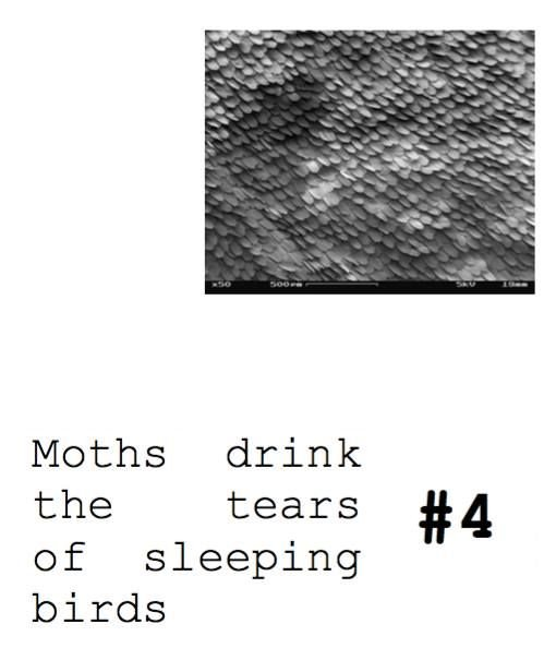 Moths drink the tears of sleeping birds #4