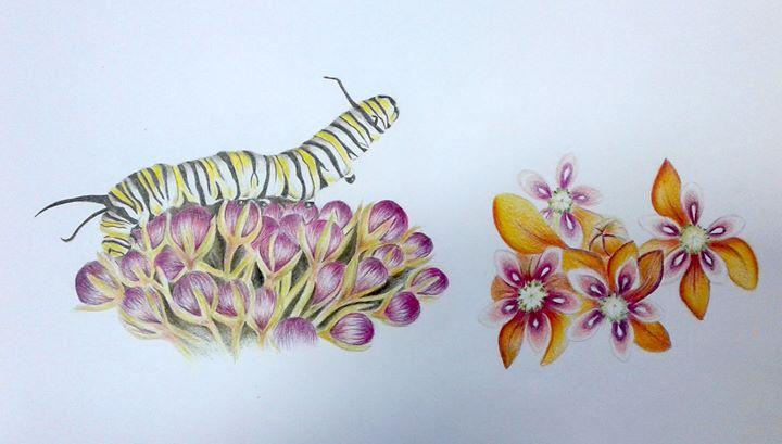 Workshop de Ilustração Científica nível II