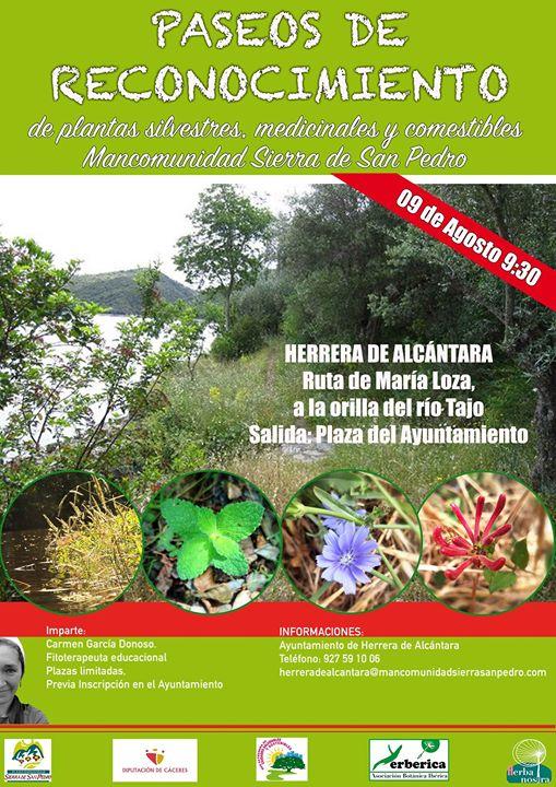 Paseo de reconocimiento de plantas medicinales y comestibles