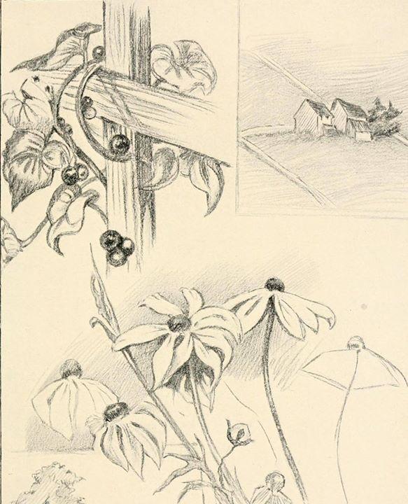 Curso Livre de Desenho: Intermédio