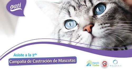 2da Campaña de Castracción de Mascotas