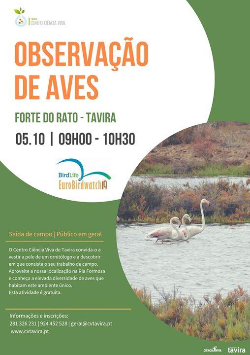 Observação de aves | Eurobirdwatch