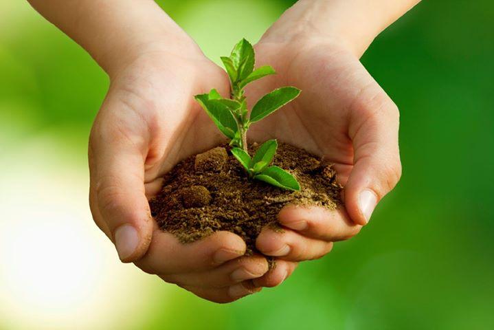 Reflorestação, Sementes e Hortas Comunitárias