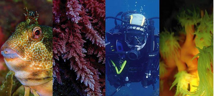 Curso de mergulho - Open Water Diver - PADI