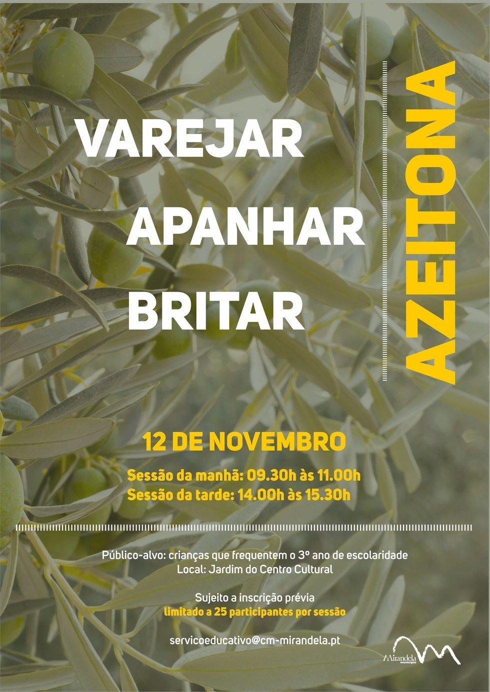 Azeitona: Varejar, Apanhar e Britar