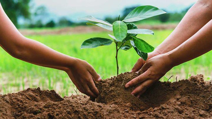 Taller 'Rehabilitación Ecológica'