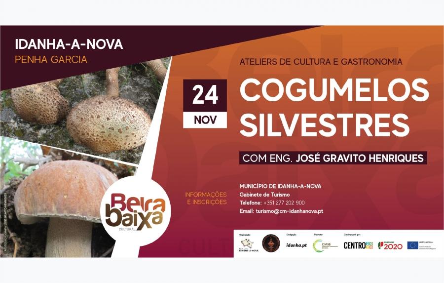 ESGOTADO | Cogumelos Silvestres