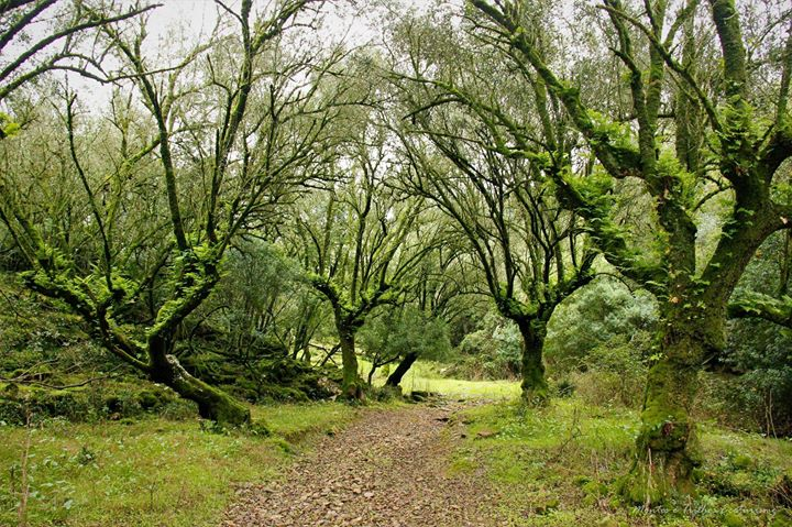Bosques, Ribeiros e Vales Cistercienses - Alcobaça