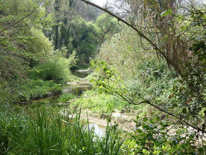 Carvalhal: Nos Caminhos do Lizandro