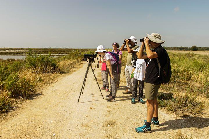 Observação de Aves no Estuário do Tejo