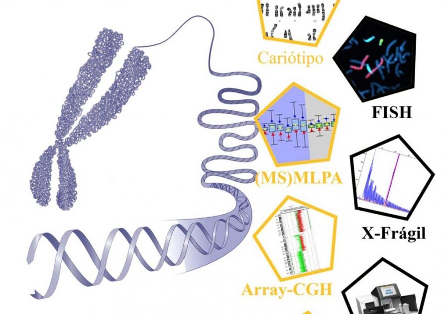 """3ª edição do """"Curso teórico-prático em Citogenética e Genómica no diagnóstico e investigação"""""""