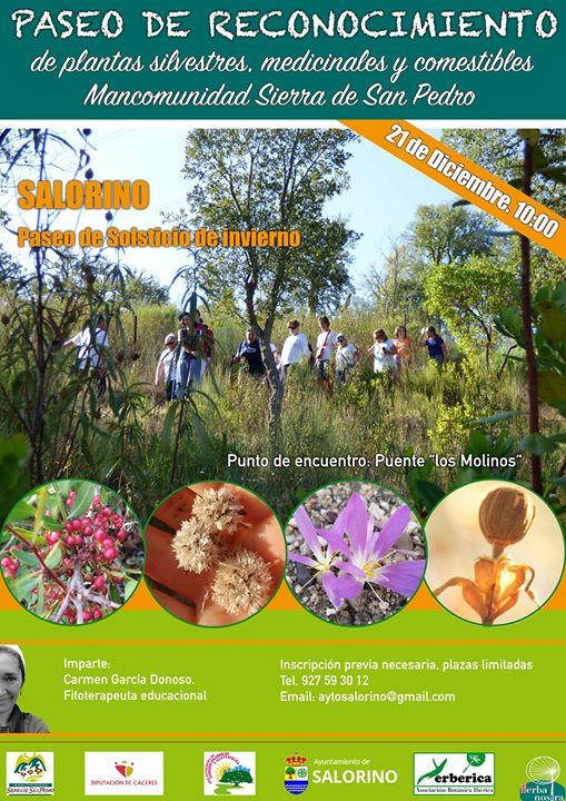 Paseo de Reconocimiento de plantas medicinales, silvestres y com