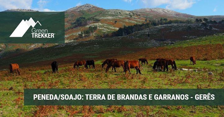 Peneda/Soajo: Terra de Brandas e Garranos - Gerês