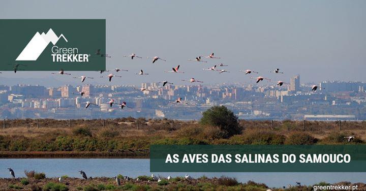 As aves das Salinas do Samouco