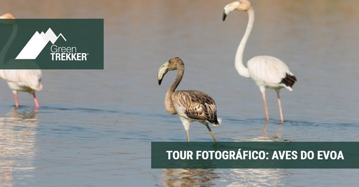 Tour Fotográfico: Aves do Evoa