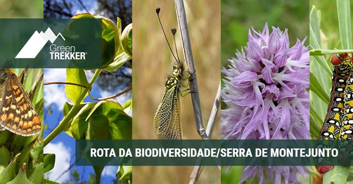 Rota da biodiversidade/Serra de Montejunto