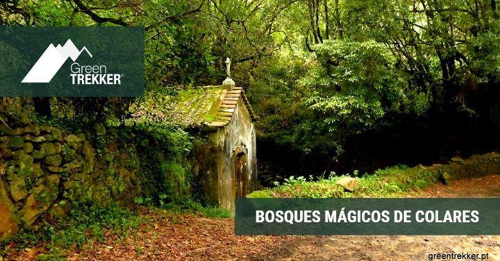 Bosques mágicos de Colares