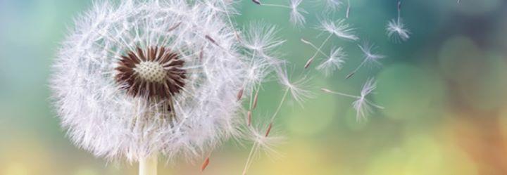 Mindful Self Compassion 8 Janeiro a 26 Fevereiro