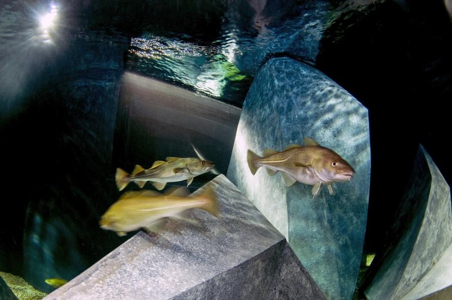 7º Aniversário Aquário dos Bacalhaus Museu Marítimo de Ílhavo