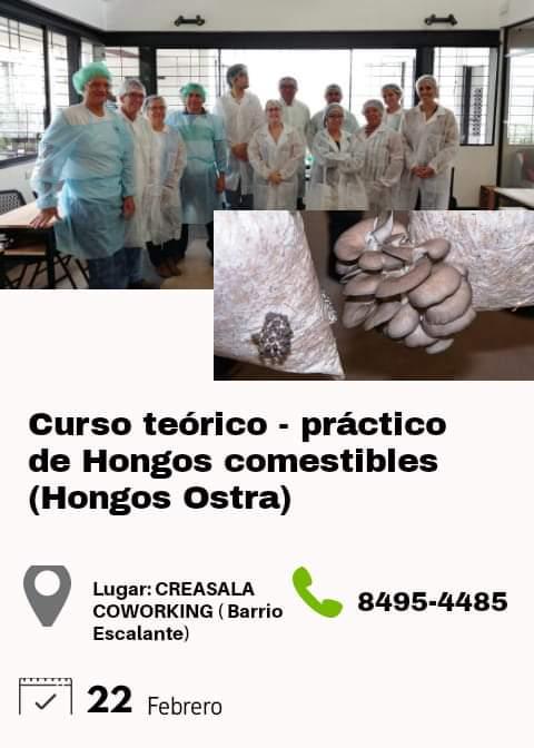 Curso Teórico - Práctico de Hongos comestibles ( Hongos OSTRA)
