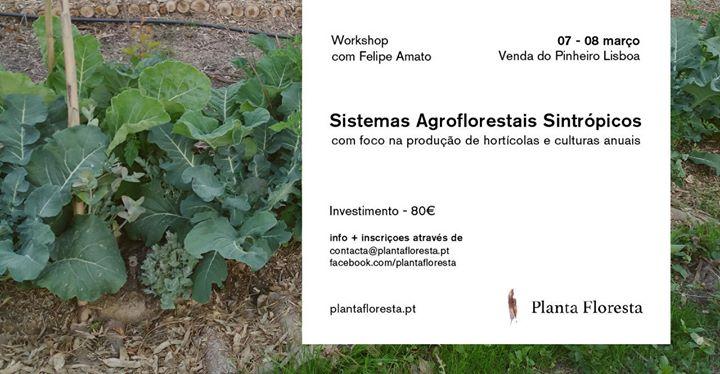 Workshop de Sistemas Agroflorestais Sintrópicos