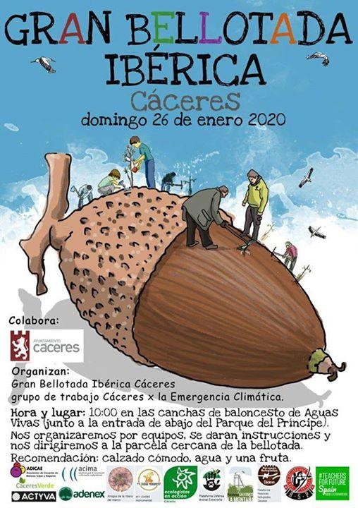 Gran bellotada ibérica - Cáceres.
