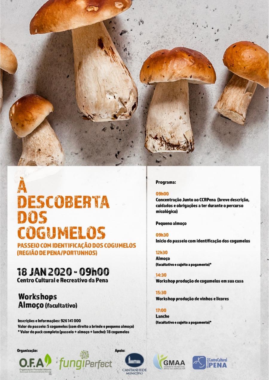 À descoberta dos cogumelos