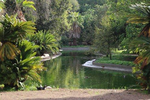 Reabertura do Jardim Botânico Tropical