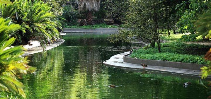 Programa de Reabertura do Jardim Botânico Tropical