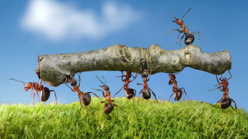 Como construir um formicário?