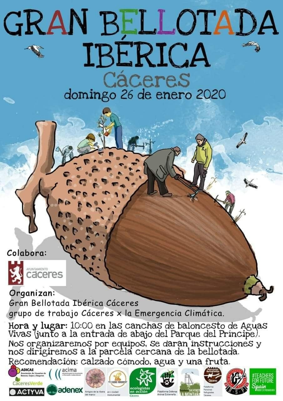 Gran bellotada ibérica en Cáceres