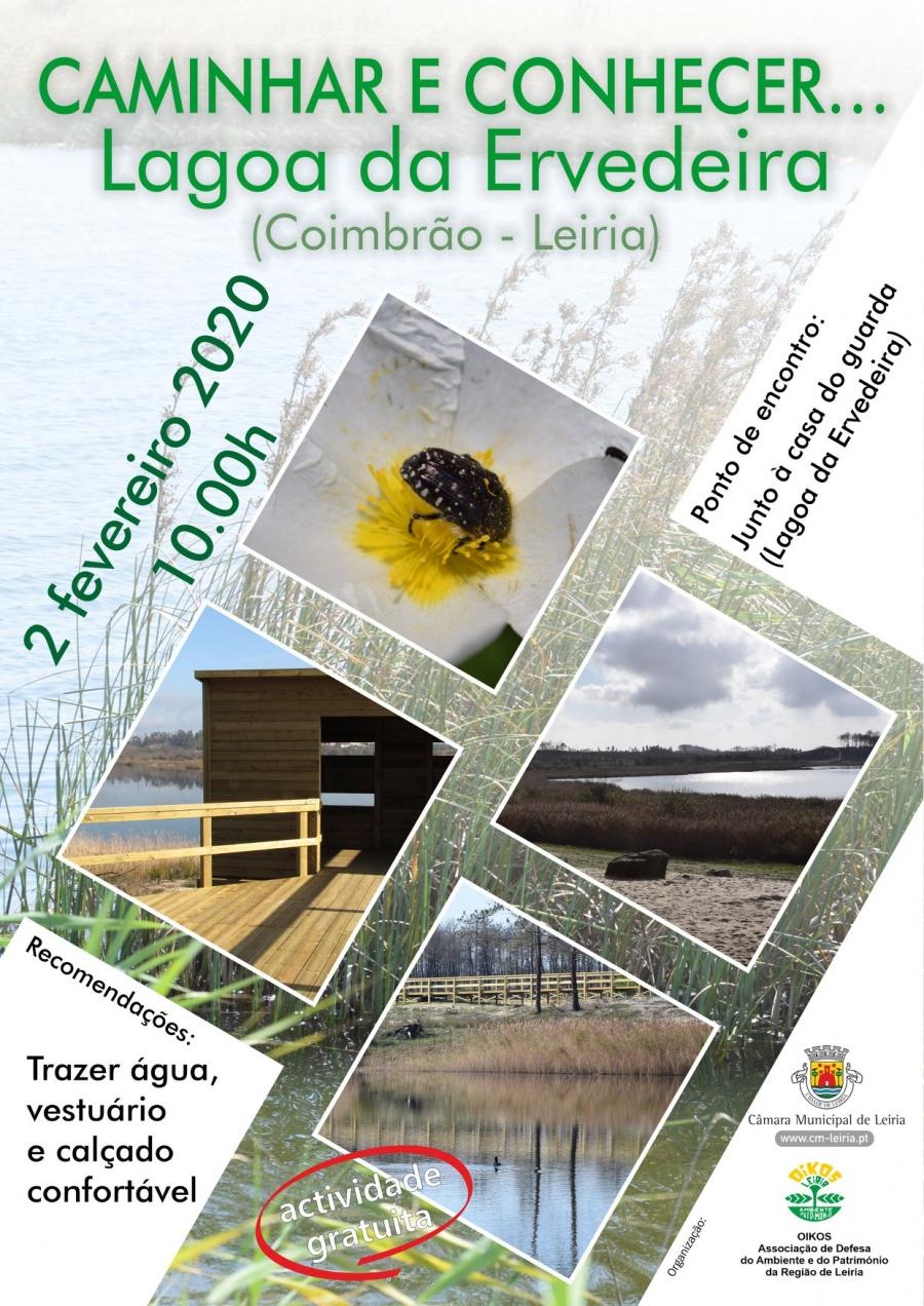 Caminhar e conhecer o ambiente no concelho - Lagoa da Ervedeira