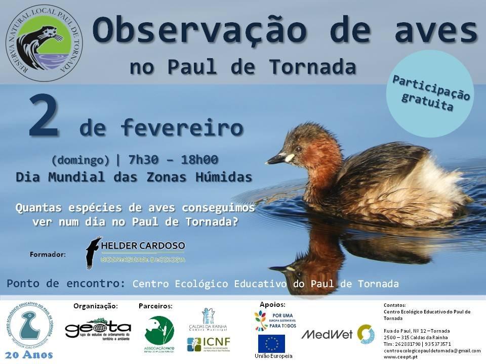 Observação de Aves - Quantas espécies de aves conseguimos ver num dia no Paul de Tornada?