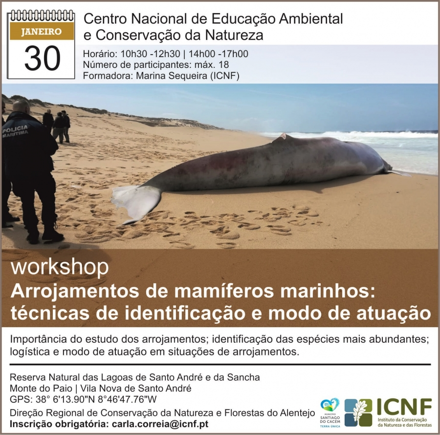Workshop – Arrojamentos de mamíferos marinhos