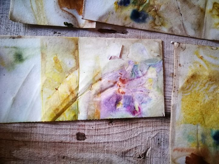 Impressão Botânica em Papel | Famílias