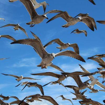 Workshop: Introdução às gaivotas de Portugal