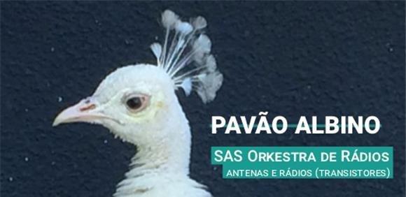 Espetáculo de Música 'Pavão Albino'