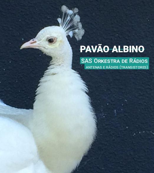 Espetáculo Pavão Albino de SAS Orkestra de Rádios