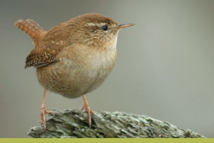 Iniciação à observação de aves