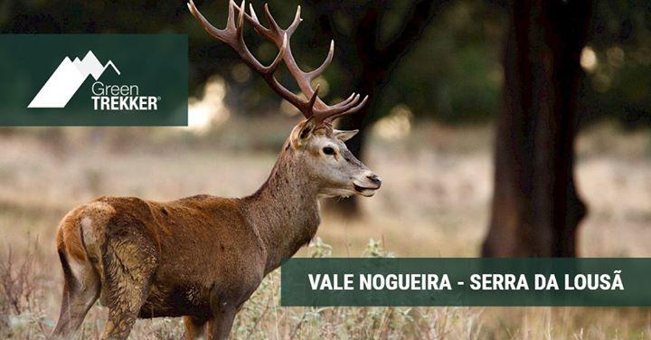 Vale Nogueira - Serra da Lousã