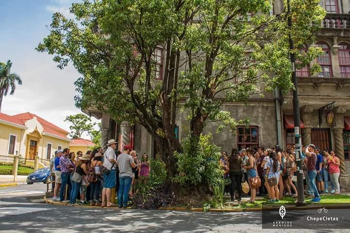 Sendero Urbano por Amón: Safari de árboles e historia