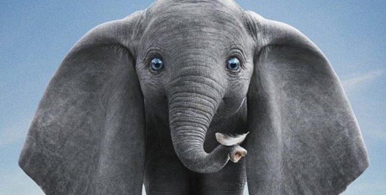 "Cinema de Animação: ""Dumbo"""