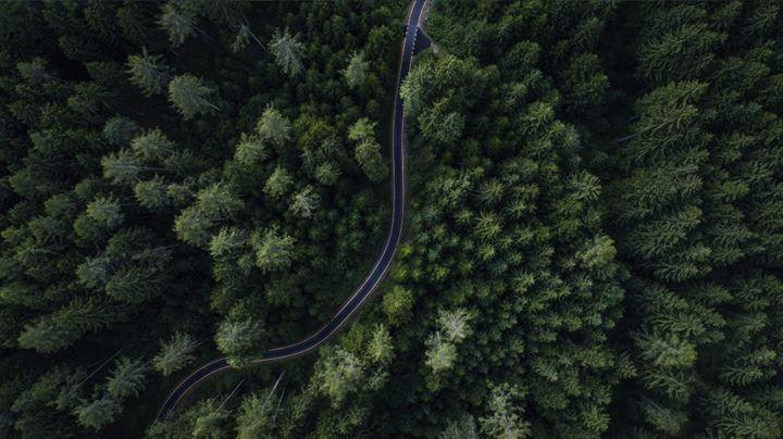 [cancelado] Seminário Cerena – Gestão Sustentável da Floresta