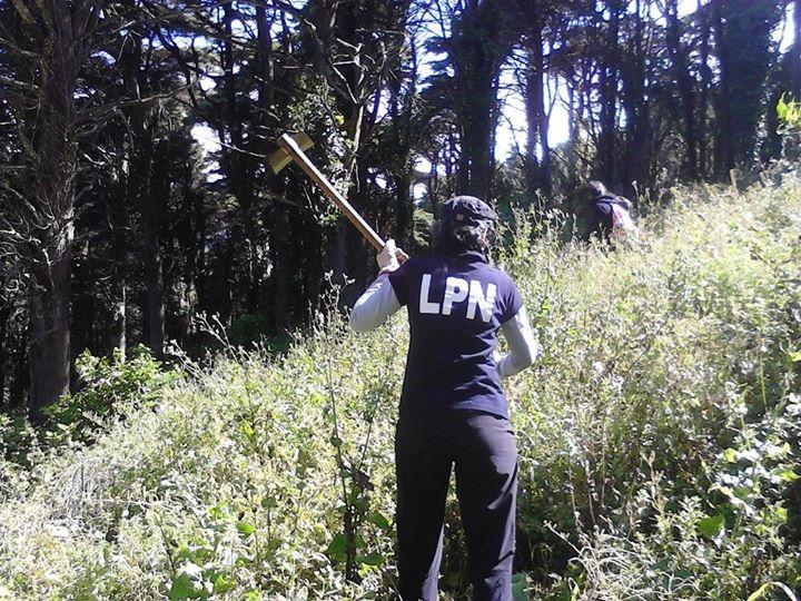 Remoção de plantas exóticas no Jamor