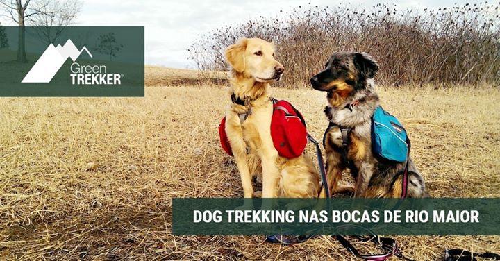 Dog Trekking nas Bocas de Rio Maior
