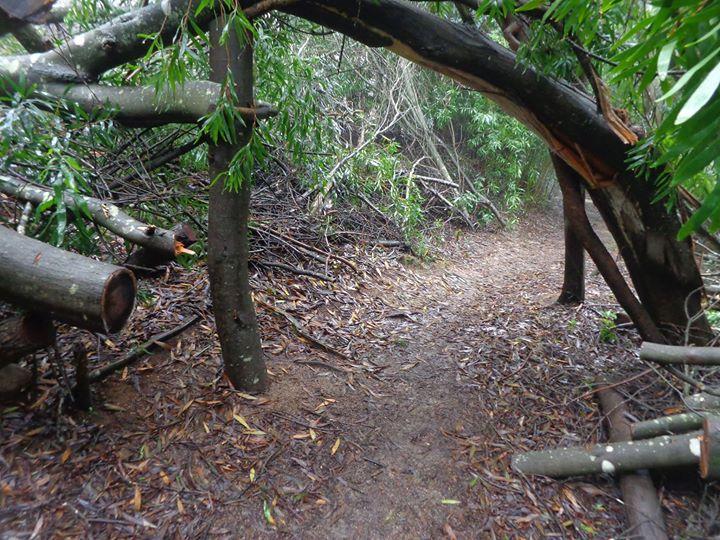 Caminhada na Serra de Sintra - No trilho do Monge