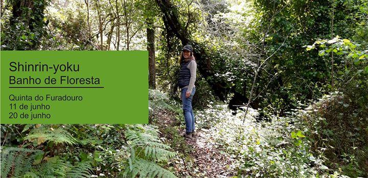 Encontros de cura na floresta