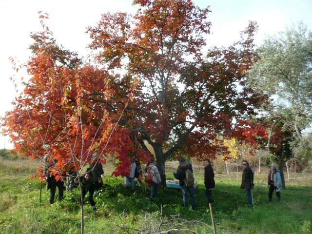 Estágios práticos em permacultura e ecologia regenerativa