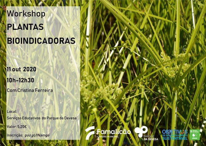 Workshop Plantas Bioindicadoras